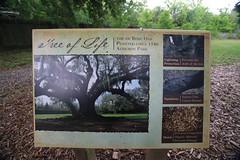 Canon206492 (godrudy6661) Tags: neworleans audubonpark treeoflife oaktrees