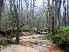 spring on the creek (Just Back) Tags: mist rot sc birds creek forest relax dead flow living early spring sand woods flora quiet cloudy decay live grow foliage bach waterloo chemistry carolina alive botany laurens biology current sprout damp blooming