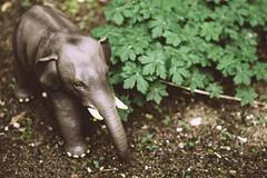 Elefantastisch 93/366 (Skley) Tags: foto natur bild elefant wald tier dschungel elefanten savane wildtier 92366