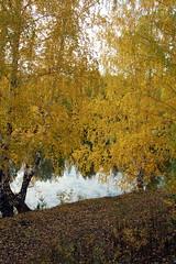 DSC_6081 (Rustam Bikbov) Tags: autumn september 2012    sverdlovskoblast
