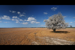 * (Henrik ohne d) Tags: tree field clouds spring tracks blooms efs1022mm eos400d hoyapro1cirpl hitechnd06gradse april2016