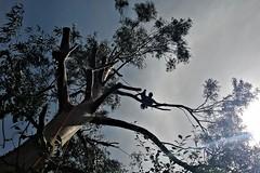 treeclimbing 2 (andrea.maglio) Tags: treeclimbing