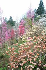 20160403-DSC_5815.jpg (d3_plus) Tags: sky plant flower macro nature rain japan walking nikon scenery waterdrop bokeh hiking drop daily rainy bloom  28105mmf3545d nikkor  wildflower  kanagawa   aftertherain dailyphoto   thesedays sagamihara 28105   dogtoothviolet   28105mm     zoomlense shiroyama    erythroniumjaponicum    28105mmf3545 d700 281053545  nikond700 aiafzoomnikkor28105mmf3545d  28105mmf3545af dogtoothvioletvillage aiafnikkor28105mmf3545d