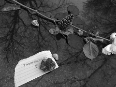 Thank you, Susan (Broot - Thanks for a half million views!!) Tags: blackandwhite bw plant paris flower monochrome cemetery grave rose spring memorial thankyou mourning susan tomb offering april tribute montparnasse grief susansontag sontag