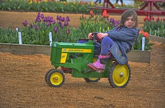 Petal Power (Kirt Edblom) Tags: red usa tractor green festival kids oregon toys outdoors march nikon child tulips outdoor overcast wife hdr johndeere tulipfestival woodburn kirt 2016 woodenshoetulipfestival gaylene woodburnoregon easyhdr edblom nikond7100 kirtedblom
