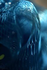 Wave (Sarah_Brigham) Tags: blue light shadow abstract detail macro texture closeup digital nikon web curves fabric form dslr loofa loofah abstractphotography nikond5200 sarahbrigham