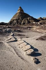 Bisti Dome (Sophie Carr Photography) Tags: usa newmexico weird desert alien badlands bisti bistibadlands