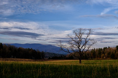Cades Cove, Smoky Mountains (briannicklaus) Tags: mountains tree grass cove smoky mountians cades