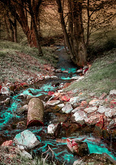Colour perspective (cee live) Tags: trees colors forest countryside log rocks stream colours surreal