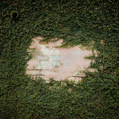 creepy (rick.onorato) Tags: wall america vines colombia south creep