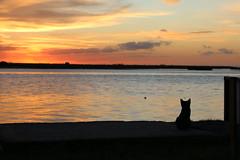 Sobras (Fiorella Momigliano) Tags: rio atardecer amor paz zen om lopez chakras tranquilidad relajacion meditar tapera meditacion