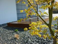 water feature (Jrg Paul Kaspari) Tags: spring maple acer garten frhling palmatum ahorn moderner wincheringen moderngarden drachenschwanzahorn seiryu acerpalmatumseiryu