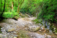Lapidose landscape (grce) Tags: trees plants mountain plant tree nature water stone forest river landscape stream stones stony mountainstream mountainforest lapidose