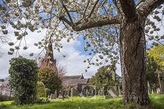 The Village spring. (alun.disley@ntlworld.com) Tags: trees church nature graveyard weather landscape spring seasons blossom religion merseyside englishvillage ancientbuilding stmaryschurcheastham easthamoldyew