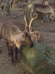 358/365 Merry Christmas Rudolf