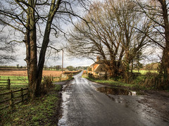 The Road to Easton, Hampshire (neilalderney123) Tags: road trees wet rural puddle olympus winchester easton 2016neilhoward 2016neilhoward omdomdem5mk2