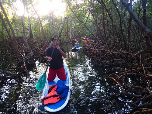 12_29_15  pm paddleboard tour Sarasota FL 05