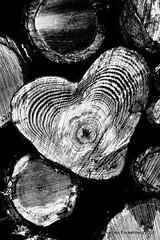 Herz des Waldes (grafenhans) Tags: white black sony alpha 700 tamron holz weiss herz baum schwarz baumstamm a700 2590 alpha700
