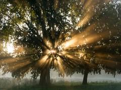 Explosion (Bernd H) Tags: trees sun netherlands october nederland sunrays amsterdamsebos 2015 canonpowershots90