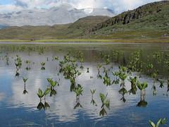 Jardn / Garden (Begoa Fernndez) Tags: lago rtico groenlandia