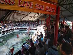 crocodile farm (tatsuya.fukata) Tags: thailand samutprakan crocodilefarm