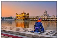 The Golden Temple (msankar4) Tags: india holy sikh gurdwara punjab amritsar trance goldentemple guru waheguru palki hymns holybook granth harmandirsahib sarover nihang sanctumsantorum granthsahib