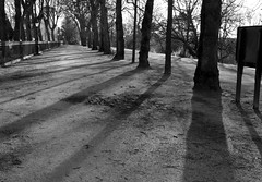 Shadows in Preston (Tony Worrall Foto) Tags: county uk trees england cold lines outdoors cool stream afternoon tour shadows open place northwest unitedkingdom path country north angles visit location lancashire prom walkway area preston sunlit northern update attraction lancs avenham welovethenorth