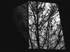 Races (Sentamashi) Tags: naturaleza blancoynegro film window analog 35mm dark artwork poetry arte darkness young bn ambient soledad refugio nikonf3 sombras siluetas reflejos contrastes analgico potico gtico romntico tenebrista