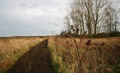 John Constable Trail, Essex, UK (lemonteajunkie) Tags: uk sky nature water field river reeds landscape countryside mud horizon trail essex flatford johnconstable