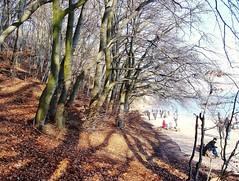 cliff (~Jonbicykle~) Tags: park winter cliff poland polska zima klif gdynia orowo zatoka gdaska