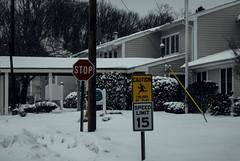 DJS_4403 (David Stebbing) Tags: snow color flickr wickford