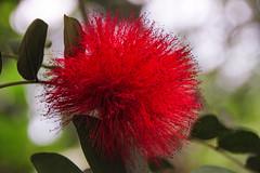 Eden 3 (bawden_mark) Tags: family flower colour canon cornwall edenproject eden canon500d tropicalbiome tamron18270mm tamronaf18270mmf3563diiivcldasphericalif