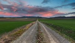 Road to nowhere (Alfredo.Ruiz) Tags: sunrise canon amanecer campo cereales pista ef1740 eos6d alavavision chicosdelalba