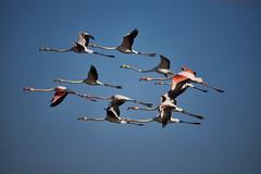 _DSC4374 (Carmen Coronado) Tags: valencia birds pájaros albufera humedales sigma150500f563apodgos nikond750
