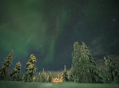 A Cabin in the Winterland (Jyrki Liikanen) Tags: snow stars cabin nikon corona lapland greenlight auroraborealis greenglow snowylandscape snowytrees lightinthedarkness starrynight deepsnow snowyroad greensky starrysky nikonphotography