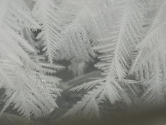 Micro-Miniature Frost Crystal Patterns resemble Snowflake or Fern Plant Structures Super Macro DSCF8503 (Ted_Roger_Karson) Tags: camera test macro water field lens photo droplets illinois frost fuji hand crystal super finepix droplet fujifilm held northern depth waterdroplets twop testphoto waterdroplet raynox macroscopic raynoxdcr150 dcr150 handheldcamera xs1 thisisexcellent macrolife takenfreehand macroscopiclens fujifilmxs1