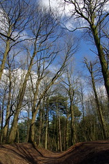 25.3.16 Delamere Forest 23 (donald judge) Tags: trees water forest countryside cheshire mere delamere