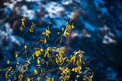 Formaggino Autunnale #28 ( YariGhidone ) Tags: life autumn mountain nature way stars landscape colours outdoor via val milky colori paesaggi montagna refuge conca stelle bivvy bivacco formaggino prali lattea germanasca cialancia