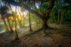 Misty mysterious Myakka in the morning (MichaelSOwens) Tags: park morning fog sunrise river palms oak state florida live cabbage sarasota hdr myakka