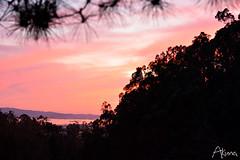 _AKU7127 (Large) (akunamatata) Tags: california sunset berkeley miller trail joaquin joachim