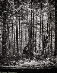 Along The Road (mjardeen) Tags: blackandwhite bw plants white black texture landscape ir pattern sony 28mm infrared converted f2 fe ferns 282 720nm lifepixel landscapesshotinportraitformat niksilverefex
