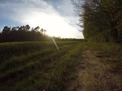 Sentiero di bosco (enzo falchetti) Tags: sentiero bosco goprohero4black