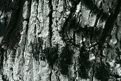Tautendorf (Harald Reichmann) Tags: kunst energie struktur farbe baum muster niedersterreich rinde gars kraft waldviertel intervention zeichnung kult aufmerksamkeit bearbeitung verteilung zauber wachtberg kunstimwald tautendorf thunau