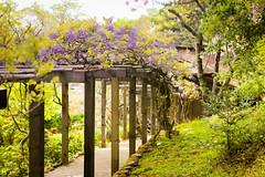 HokoneGardens-3137 (PortugePunk) Tags: nature garden saratoga siliconvalley hokonegardens