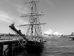 Sydney Cove (JohnVenice) Tags: blackandwhite monochrome boat ship sydney therocks operahouse tallships sydneyharbour sailingship campbellscove southernswan