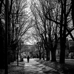 A Walk To Remember (vincentngo93) Tags: park people blackandwhite tree art public print photo streetphotography australia melbourne oneperson oneman