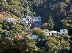 Nestled in the Bush (mikecogh) Tags: houses bush wellington suburbs hillside slopes nestled