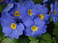 Happy Weekend! (Gartenzauber) Tags: sony natur garten floralfantasy masterphotos