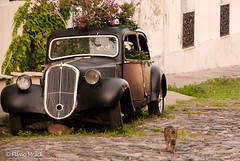 Old car and cat, Colonia del Sacramento, UY (Flvio Photography) Tags: cat uruguay colonia oldcar ano 2012 uy americadosul uruguai coloniadelsacramento