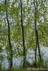 _JAM0823-2 (jamphoto53) Tags: nature d750 arbre vgtation gomtrique